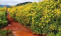 Những cung đường ngắm hoa dã quỳ đẹp tại Đà Lạt
